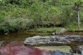 Mountain river Canio Cristales — Stock Photo
