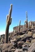 L'île Inca Wasi - île de cactus — Photo