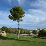 Golf courses in Orihuela Costa — Stock Photo #74595575