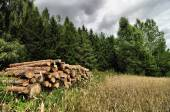 Cutted trees logs stored next to a forest and grain field — Stock Photo