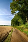 Land road along a forest and a field — Stock Photo