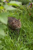 Кот осваивает новую территорию — Stock Photo