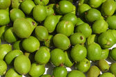 Green young walnuts — Stock Photo