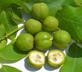 Green young walnuts in husks — Stock Photo