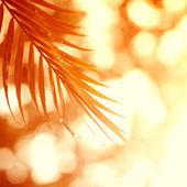 ヤシの木と空に黄色い太陽 — ストック写真