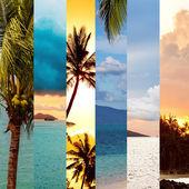 Sea and palm trees, collage, Koh Samui, Thailand — Stock Photo