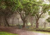 Summer rain in Thailand — Stock Photo