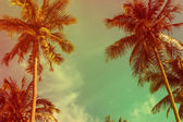 Tropical palm — Stock Photo