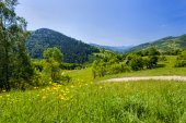 Meadows in the Carpathians — Stock Photo