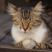 Schlafende katze — Stockfoto