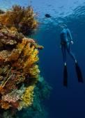 Freediver — Stock Photo