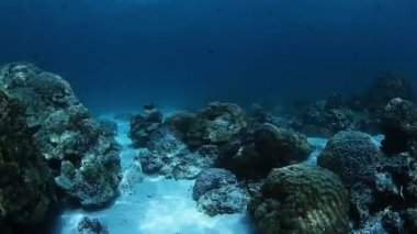 Sea bottom with coral reef — Stock Video