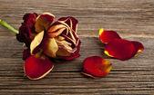 Rose on wood — Stock Photo