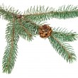 Branch of fir-tree — Stock Photo #59550919
