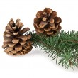 Branch of fir-tree — Stock Photo #59550965