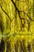 Tree reflection on the water — Stock Photo