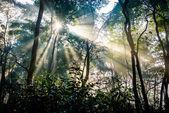 Sunrays passing through trees — Stock Photo