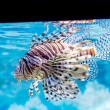 The underwater world. Bright Exotic Tropical coral fish in the R — Stock Photo #60195053