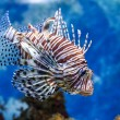 The underwater world. Bright Exotic Tropical coral fish in the R — Stok fotoğraf #60196007
