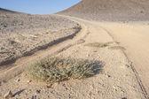 Vehicle tracks through an arid desert — Stock Photo