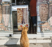 Cat sat outside a kebab food store — Stock Photo