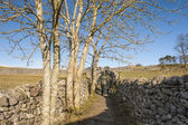Rambler walking in english countryside — Stock Photo