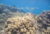 Underwater tropical coral reef — Stock Photo