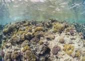 Tropical coral reef scene underwater — Stock Photo