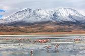 Bolivianska landskap — Stockfoto