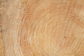 Woodgrain — Stock Photo