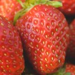 Garden strawberries close-up — Stock Photo #58339861