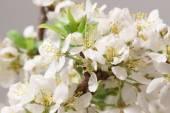 Spring came  — Stock Photo