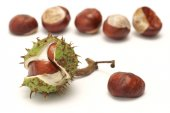 Horse chestnut (Aesculus L.) - fruit — Stock Photo
