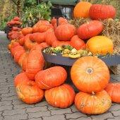 Stack of Pumpkins, Halloween — Stock Photo