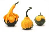 Decorative pumpkins (Cucurbita L.) — Stock Photo