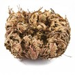 Rose of Jericho (Selaginella lepidophylla), other common names include Jericho rose, resurrection moss, dinosaur plant, stone flower, Resurrection plant, Mary's flower, Palestinian tumbleweed. — Stock Photo #66951593
