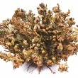 Rose of Jericho (Selaginella lepidophylla), other common names include Jericho rose, resurrection moss, dinosaur plant, stone flower, Resurrection plant, Mary's flower, Palestinian tumbleweed. — Stock Photo #66967393