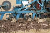 Agricultural Plough. — Stock Photo