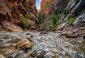 Virgin river in zion national park utah — Stock Photo