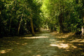 Green forest path in tikal park guatemala — Stock Photo