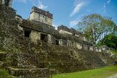 Tikal mayan ruins in guatemala — Stockfoto