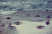 Small crabs along the coast in galapagos island — Stock Photo