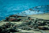 Iguanas sunbathing in floreana island galpagos — Stock Photo