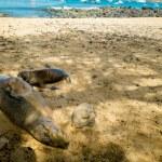 Sea lion sunbathing in san cristobal galapagos islands — Stock Photo #61835931