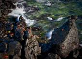 Red sally light foot crabs on rocks and waves movement, Galapagos Islands — Stock Photo