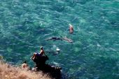 Unidentified tourists enjoying the ocean with crystal clear water and swimming sea lions in San Cristobal, Galapagos Islands — Stock Photo