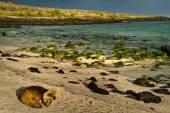 Cute sea lions sleeping in La Loberia beach, San Cristobal, Galapagos Islands — Foto de Stock