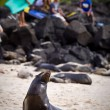 Beautiful unafraid sea lion sunbathing on the beach with young teen surfers in background — Stock Photo #69933815