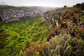 Amazing landscape of Twin Craters, Los Gemelos, mysterious mossy forest in Santa Cruz island, Galapagos — Stock Photo