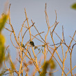 Cute little birds sitting on tree branches — Stock Photo #72261351